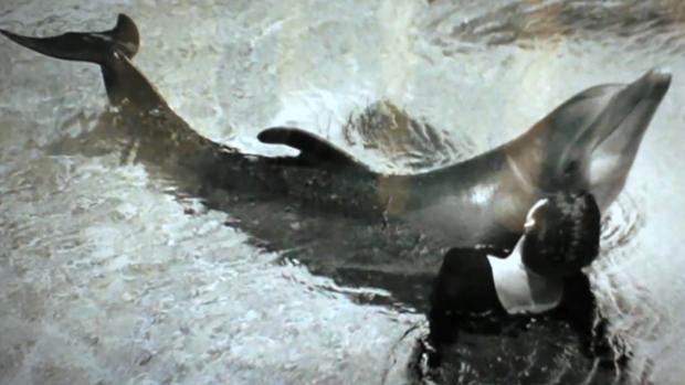 sex cu delfin