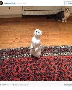 1430308590_calvin-harris-cats