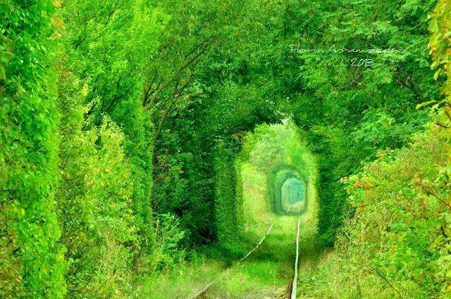 tunnel of love ro