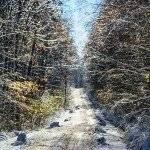 Descopera_frumusetea_iernii_prin_fotografiile_lui_Sorin_Onisor1