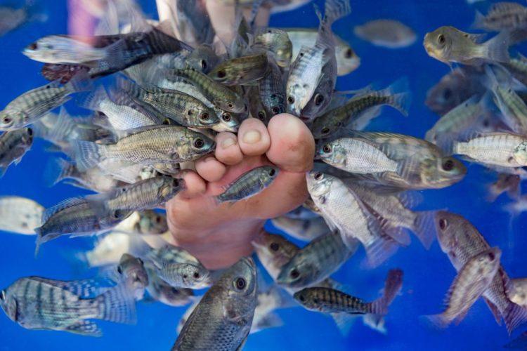 pedichiura cu peștișori