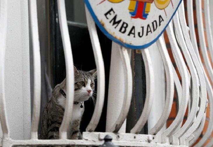 Julian Assange a primit un ultimatum privind stilul de viață al pisicii sale în ambasada Ecuador