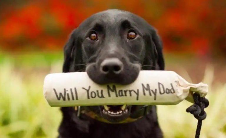 Cele mai frumoase idei de cereri în căsătorie care garantează un DA hotărât