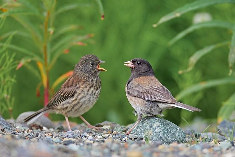 păsările