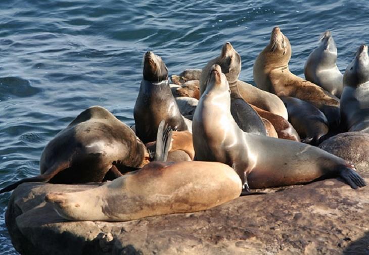 Schimbările climatice provoacă răspândirea virusurilor fatale la mamiferele marine